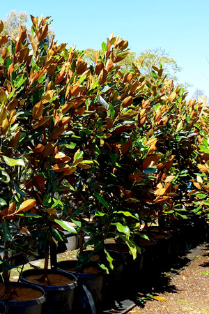 Moss Growers Direct Online Nursery Online With Great Low Prices